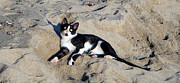 Emilija Cerovic - Cat On The Beach