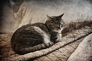 Sleeping Cat Prints - Cat on the Bed Print by Carol Leigh