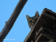 http://www.hellenicaworld.com/Greece/Geo/Hydra/en/Hydra - Cat on the Roof by Alexandros Daskalakis