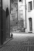 Cobblestones Posters - Cat Sauntering Poster by Colleen Williams