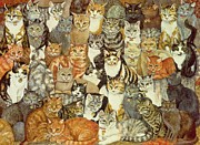 Kittens  Paintings - Cat Spread by Ditz