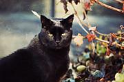 Cat Stevens Print by Trish Tritz