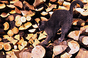 Wood Pile Prints - Cat Stretching on Firewood Print by Thomas R Fletcher