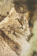 Antique Look Digital Art - Cat texture portrait by Raffaella Lunelli
