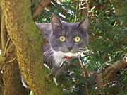 Elizabeth Debenham - Cat up a tree