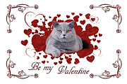 British Shorthair Art - Cat Valentine card by Waldek Dabrowski
