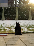 Art Photography Prints - Cat waiting for spring Print by Art Photography