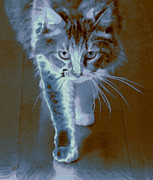 Heads Digital Art Prints - Cat Walking Print by Ben and Raisa Gertsberg