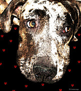 Framed Prints Prints - Catahoula Leopard Dog - Lover Print by Sharon Cummings