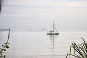 Catamaran On A Misty Morning Print by Wendy Townrow