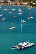 Catamaran  St Thomas Usvi Print by Amy Cicconi