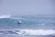 Kodiak Photo Prints - Catching a Wave in a Blizzard Print by Tim Grams