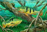 Largemouth Posters - Catching Peacock Bass - Pavon Poster by Terry Fox