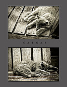 Catnap Print by Greg Jackson