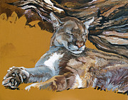 Mountain Lion Paintings - Catnap by J W Baker