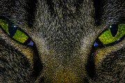 Green Monster Prints - Cats Eye Print by Mitch Shindelbower