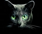 Light In The Eyes Posters - Cats eyes in the dark Poster by Lilia D