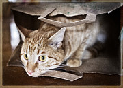Blank Greeting Card Prints - Cats In The Bag 2 Print by Patrick M Lynch