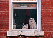 Randi Shenkman Photo Metal Prints - Cats on a Sill Metal Print by Randi Shenkman