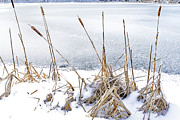 Ditch Framed Prints - Cattails and Frozen Lake Framed Print by Thomas R Fletcher