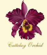 David Griffith Framed Prints - Cattelay Orchid Framed Print by David Griffith