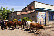 Poor People Prints - Cattle Drive Print by Wendy White