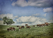 Jeff Swanson - Cattle Grazing
