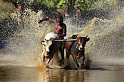 Pradeep Subramanian - Cattle Race In Kerala...