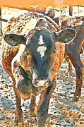 Cattle Round Up Print by Artist and Photographer Laura Wrede