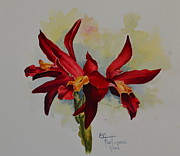 Evelyn  Mendez - Cattleya Chocolate Drop...