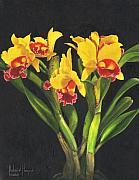 Cattleya Orchid Print by Richard Harpum