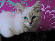 Kitten Digital Art - Cattry2 by BratLittlePrincess