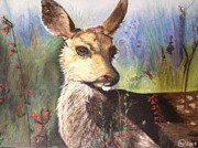 Mule Deer Pastels Posters - Caught me looking Poster by Amy Wyatt