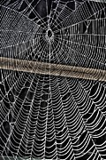 Deceit Digital Art Prints - Caught Up in Various Webs Print by Dan Stone
