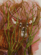 Fauna Mixed Media Originals - Cautious by Bonnie Rodgers