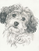 Barbara Keith - Cavachon 2