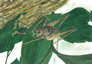 Pollution Drawings - Cave Cricket 1 by T Visco