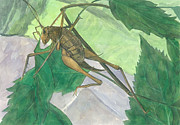 Pollution Drawings - Cave Cricket 2 by T Visco