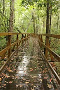 Melissa Herndon - Cay Creek Boardwalk