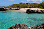 Miami River Photos - Cayman Beach by Carey Chen