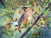 Cedar Waxwing Framed Prints - Cedar Waxwing On Berry Branch Framed Print by Patricia Pushaw