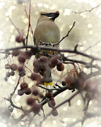 Appleton Prints - Cedar Waxwings Dream Print by Carol Toepke