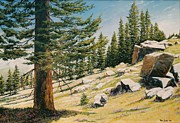 Cedars Paintings - Cedars on the Ridge by Tom Joslin