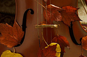 Mick Anderson Prints - Cello Autumn 4 Print by Mick Anderson