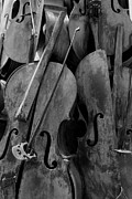Strings Digital Art Posters - Cellos4 Black And White Poster by Rob Hans