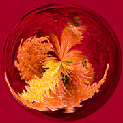 Orbital Prints - Celosia on Fire Print by Anne Gilbert
