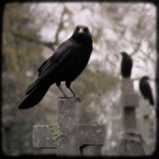 Cemetery Digital Art Prints - Cemetery Crows Print by Gothicolors And Crows