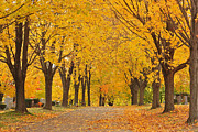Cemetery In Autumn Print by Gail Maloney