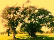 Lee Farley Prints - Cemetery trees Print by Lee Farley