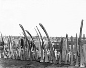 1920 Framed Prints - Cemetery Whale Bone Fence Framed Print by Underwood Archives